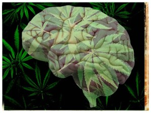cerebro cannabis