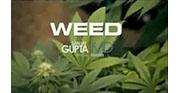 La marihuana, ¿nuevo tratamiento potencial en epilepsia?