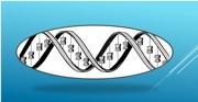 Un nuevo gen aparece involucrado en epilepsias fotosensibles y en el síndrome de Jeavons