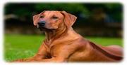 Nuevo gen asociado a epilepsia fotosensible en perros, similar a una epilepsia mioclónica juvenil