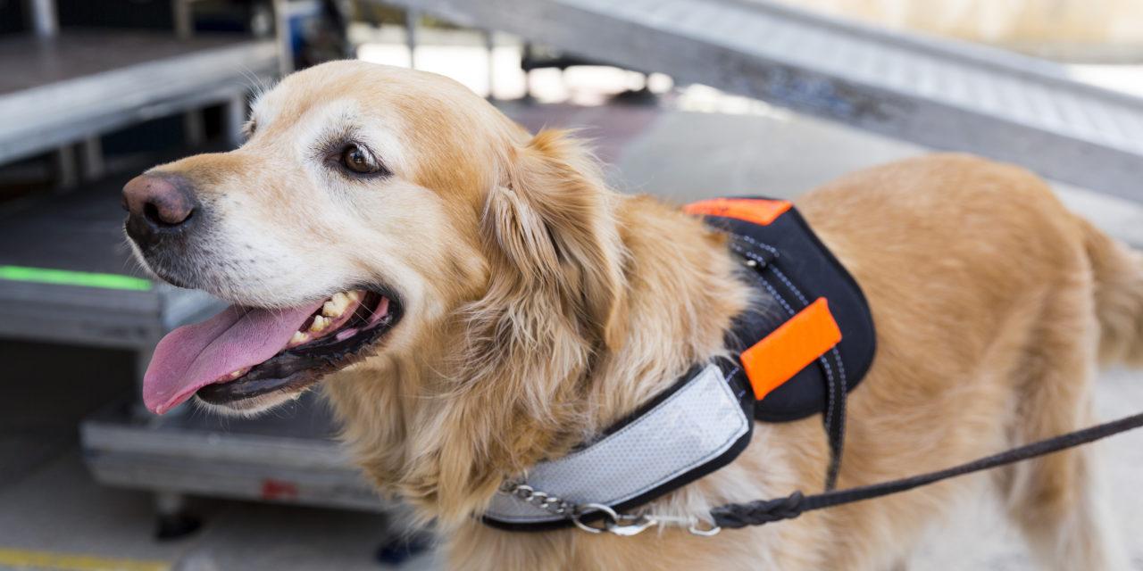 Epidogs: en busca del mejor entrenamiento para perros dedicados al cuidado de las personas con epilepsia