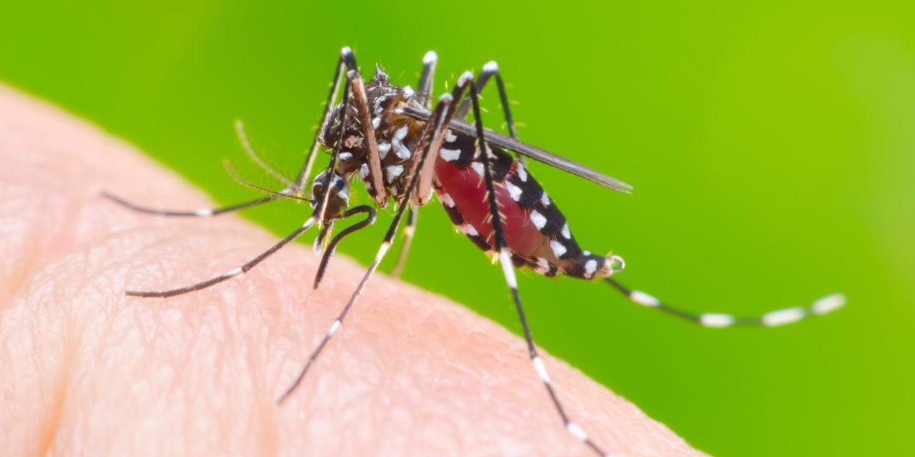 Infección por virus Zika y epilepsia infantil