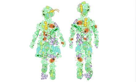 La dieta cetógena produce cambios en la flora intestinal que median su efecto…pero que podrían tener efectos negativos sobre la salud intestinal y general