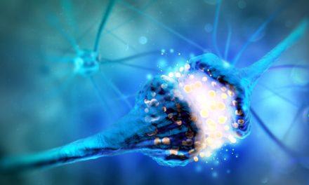 Nuevas datos genéticos explican variantes clínicas de la encefalopatía epiléptica STXBP1