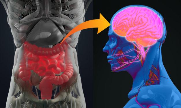 ¿Se podrá alcanzar un mejor control de la epilepsia con la modificación del microbioma intestinal?